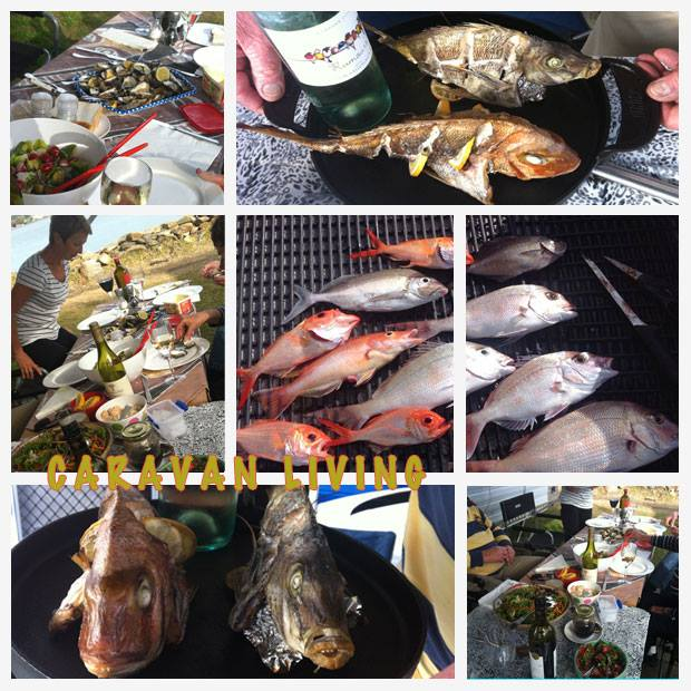 1-fish